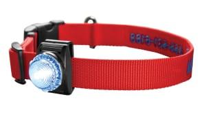 LED Safety Collar Light 7X0G