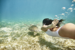 Catch glimpses of sea turtles just off the resort's beaches.
