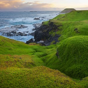 Phillip Island is home to approximately 32,000 little penguins.