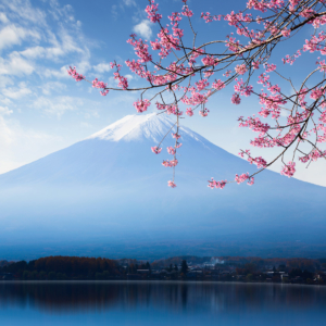 Mount Fuji in Japan is popular yearround, but particularly during cherry blossom season in the spring.